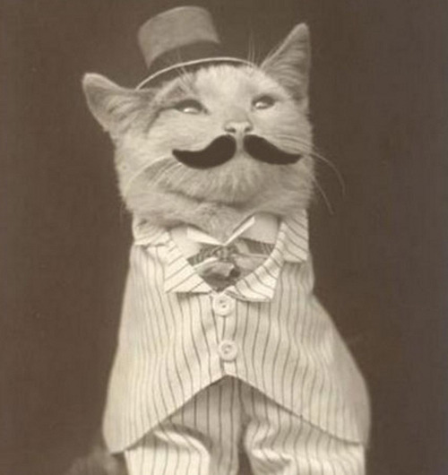 The Pin-Striped, Three-Piece Suit, Top Hat Cat Since the picture is vintage, it is fair to assume that this little cat suit, hat and moustache were handmade since Build-A-Bear Workshops weren't around. To take the time to make the suit and take a photograph of him, is someone who really loved their cat. Either that, or it's a picture for an ad so all of the sentimentality is completely gone from it.