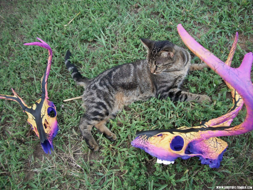 Miss Bob approves of the Dead Tree Sunset deer skulls. :)