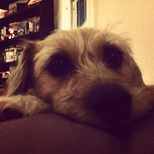 Good night sasha! #dogs #pets #dogsitting #minneapolis  (Taken with Instagram at Prospect park)