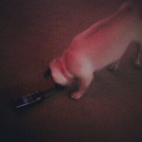 Hi my name is Sadie. And, I'm an alcoholic.  (Taken with Instagram)