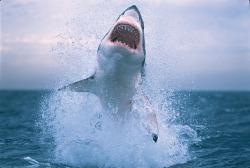 shark shark week