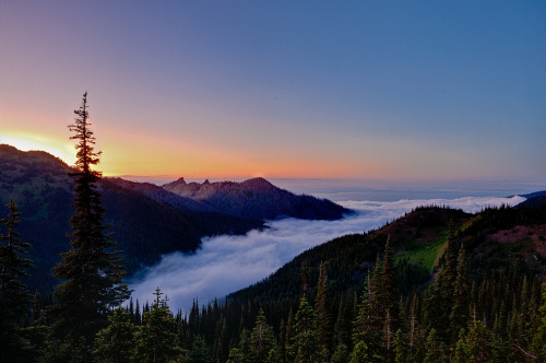 woodendreams:   (by NW Vagabond)