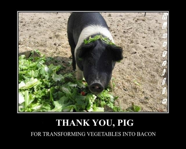 knusprig-titten-hitler:  Thank you, pig!  define:  magic