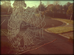 Spider web on a fresh winter's morning in Melbourne.
