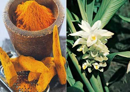 The active ingredient in turmeric is curcumin. Tumeric has been used for over 2500 years in India, where it was most likely first used as a dye. The medicinal properties of this spice have been slowly revealing themselves over the centuries. Long known for its anti-inflammatory properties, recent research has revealed that turmeric is a natural wonder, proving beneficial in the treatment of many different health conditions from cancer to Alzheimer's disease. Here are 20 reasons to add turmeric to your diet: 1. It is a natural antiseptic and antibacterial agent, useful in disinfecting cuts and burns. 2. When combined with cauliflower, it has shown to prevent prostate cancer and stop the growth of existing prostate cancer. 3. Prevented breast cancer from spreading to the lungs in mice. 4. May prevent melanoma and cause existing melanoma cells to commit suicide. 5. Reduces the risk of childhood leukemia. 6. Is a natural liver detoxifier. 7. May prevent and slow the progression of Alzheimer's disease by removing amyloyd plaque buildup in the brain. 8. May prevent metastases from occurring in many different forms of cancer. 9. It is a potent natural anti-inflammatory that works as well as many anti-inflammatory drugs but without the side effects. 10. Has shown promise in slowing the progression of multiple sclerosis in mice. 11. Is a natural painkiller and cox-2 inhibitor. 12. May aid in fat metabolism and help in weight management. 13. Has long been used in Chinese medicine as a treatment for depression. 14. Because of its anti-inflammatory properties, it is a natural treatment for arthritis and rheumatoid arthritis. 15. Boosts the effects of chemo drug paclitaxel and reduces its side effects. 16. Promising studies are underway on the effects of turmeric on pancreatic cancer. 17. Studies are ongoing in the positive effects of turmeric on multiple myeloma. 18. Has been shown to stop the growth of new blood vessels in tumors. 19. Speeds up wound healing and assists in remodeling of damaged skin. 20. May help in the treatment of psoriasis and other inflammatory skin conditions. Turmeric can be taken in powder or pill form. It is available in pill form in most health food stores, usually in 250-500mg capsules. Once you start using turmeric on a regular basis, it's fun to find new ways to use it in recipes. My favorite way to use it is to add a pinch of it to egg salad. It adds a nice flavor and gives the egg salad a rich yellow hue. Because of all these properties, the root powder makes for an amazing face mask for problem skin!! check out my posting from Anam Saleem's Blog!!  Contraindications: Turmeric should not be used by people with gallstones or bile obstruction. Though turmeric is often used by pregnant women, it is important to consult with a doctor before doing so as turmeric can be a uterine stimulant. Taken from HealthDairies.com, Turmeric http://www.healthdiaries.com/eatthis/20-health-benefits-of-turmeric.html