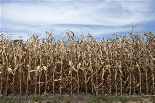 Drought Causes Lowest Crop Yield in 15 Years The government slashed its expectations for U.S. corn and soybean production for the second consecutive month, predicting what could be the lowest average corn yield in more than 15 years as the worst drought in decades scorches major farm states.Nonetheless, Agriculture Secretary Tom Vilsack, in a statement supplied exclusively to the Associated Press, insisted U.S. farmers and ranchers remain resilient and the country will continue to meet demand as the global leader in farm exports and food aid. The U.S. Agriculture Department cut its projected U.S. corn production to 10.8 billion bushels, down 17 percent from its forecast last month of nearly 13 billion bushels and 13 percent less than last year. That also would be the lowest production since 2006.Read more: http://www.laboratoryequipment.com/news/2012/08/drought-causes-lowest-crop-yield-15-years