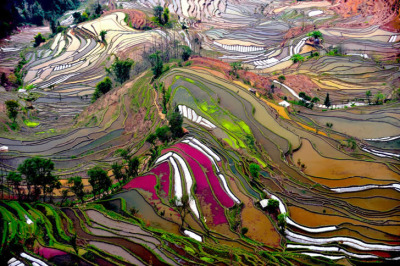 Aerial View of terraced rice fields, China by Thierry Bornier  Looks almost like stained glass art.