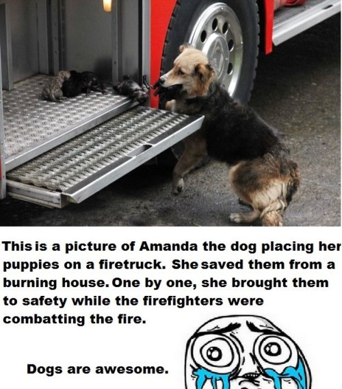 nahima20:  Dogs can be amazing. :)  That awkward moment when a dog is a better parent that some humans