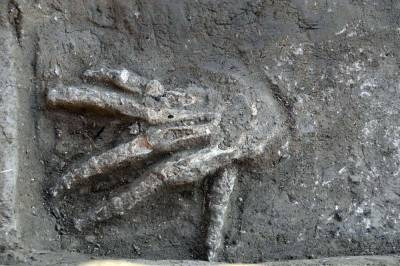 "Severed Hands Discovered in Ancient Egypt Palace  A team of archaeologists excavating a palace in the ancient city of Avaris, in Egypt,  has made a gruesome discovery.  The archaeologists have unearthed the skeletons of 16 human hands buried in four pits. Two of the pits, located in front of what is believed to be a throne room, hold one hand each. Two other pits, constructed at a slightly later time in an outer space of the palace, contain the 14 remaining hands. They are all right hands; there are no lefts. ""Most of the hands are quite large and some of them are very large,"" Manfred Bietak, project and field director of the excavations, told LiveScience.  The finds, made in the Nile Delta northeast of Cairo, date back about 3,600 years to a time when the Hyksos, a people believed to be originally from northern Canaan, controlled part of Egypt and made their capital at Avaris  a location known today as Tell el-Daba. At the time the hands were buried, the palace was being used by one of the Hyksos rulers, King Khayan.  [See Photos of the Buried Hands]  More here."