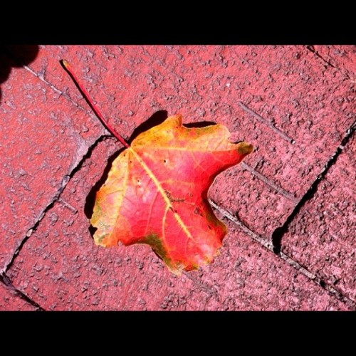 Already?? #color #leaves #Chautauqua #WNY #red #yellow #brickwalk #bricks #leaves #fallen #early  (Taken with Instagram)