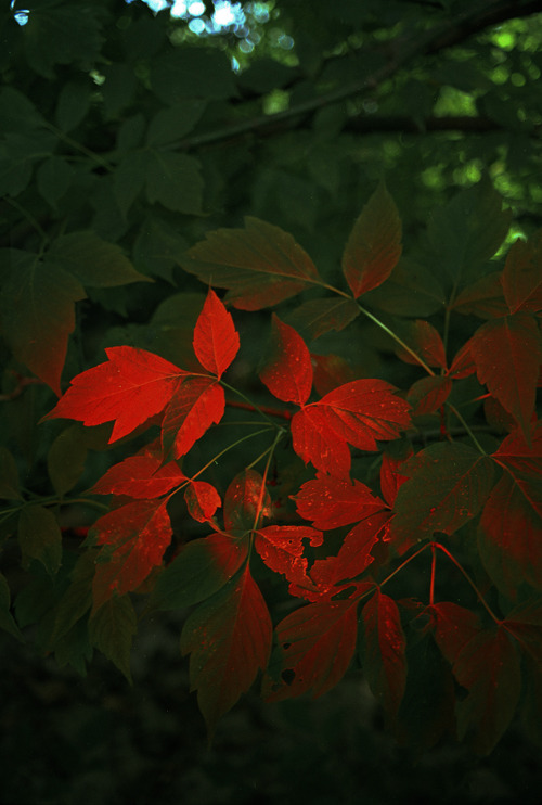Bleeding Leaves