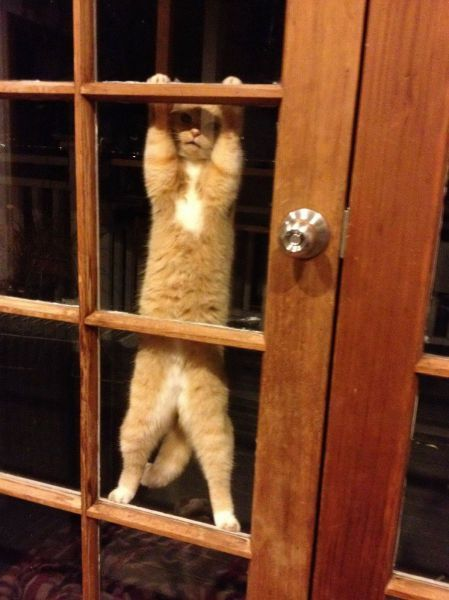 the-absolute-funniest-posts:  robotindisguise: I think the cat wants something   My lovely followers, please follow this blog immediately!
