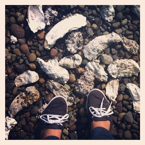 Oyster shells on the beach (Taken with Instagram)