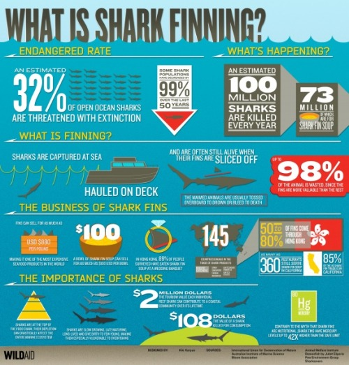 "fuckyeahsharks:  There has been a lot in the news recently about shark finning. It's the inhumane practice of capturing a shark, slicing its fins off (shark fin soup is an expensive delicacy popular at Chinese weddings and Chinese New Year celebrations), and tossing the rest of the animal overboard to bleed out a die. As noted on the Save Our Seas Foundation website, ""Compared to other commercial fisheries, the shark-fin industry is opaque, secretive, and often operates in a legal grey area, exploiting loopholes in anti-finning laws and keeping few records. In addition to this, reporting can be unreliable and misleading, as member countries of the UN Food and Agriculture Organisation (FAO) report shark catches with varying degrees of detail and accuracy"". There is some forward momentum. A ban has been put in place in California, Hawaii, Oregon, and Washington to end the practice. California will also implement a ban on the importation of fins starting January 1, 2013. Although, as the LA Times writes, it is still an uphill battle in China. Wildaid, in conjunction with artist Kiki Karpus, created this powerful ""What is shark finning?"" infographic as a way to understand more on the harmful effects the practice has on the entire ocean ecosystem. (via What is shark finning? « Beach Chair Scientist)"