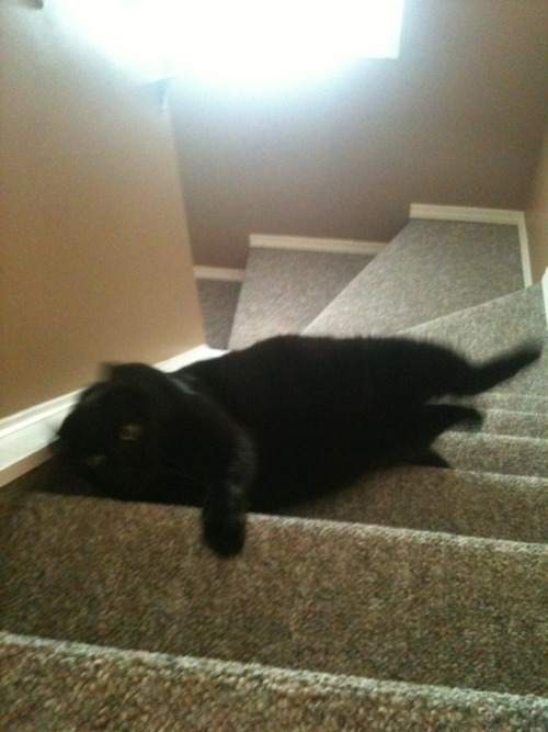 my cat was fucking around on the stairs i told him he was going to fall but he didn't listen and fell down the stairs