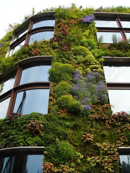 timbllr:  idealhouse:  Building with a vertical garden  the blue plants look so good the green wall