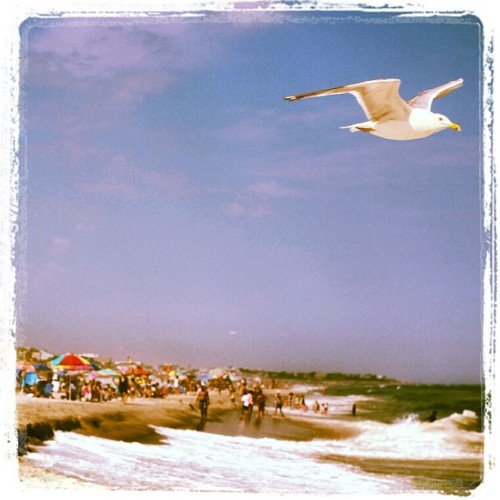 sniped #seagull on the #beach in #LBI (Taken with Instagram at Holgate Beach LBI)