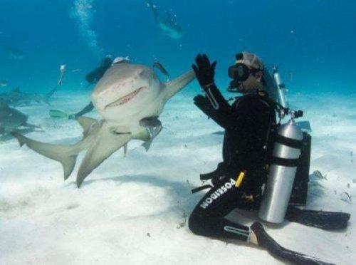 collegehumor:  12 Pictures of People Befriending Sharks It's shark week, that magical time of year when people pretend to care about programming on the Discovery Channel. To celebrate, here's 12 pictures of people being best buds with sharks.
