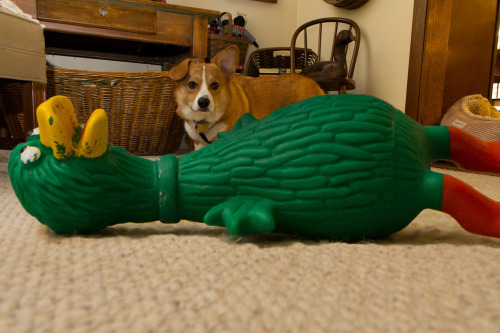 thefrogman:  That's a big squeaky duck.