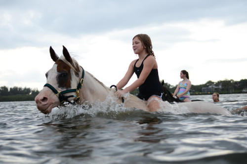 BeachHorses.comSwimming horses in the salt water in Bradenton, Florida!