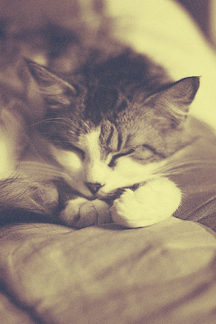 Sleeping cat. by Anne-Sophie G on Flickr.