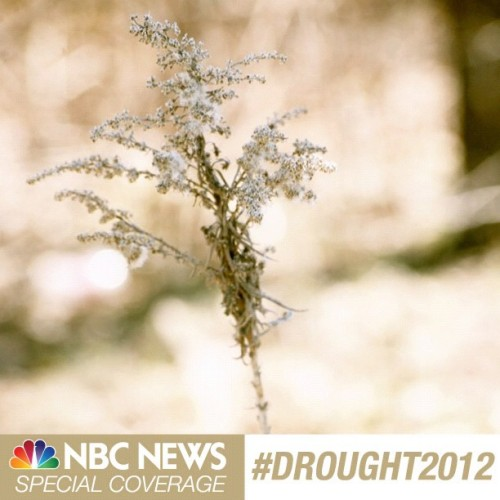 NBC News Special Coverage: #Drought2012 (Photo: Sarah Coffey / NBC News) The US is currently in the throes of the worst drought in more than 50 years. Special coverage begins Wednesday across the networks of NBC News. Show us how you've been affected by sharing photos on Instagram or Tumblr with the tag #Drought2012.