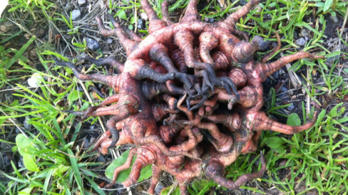 Mysterious Cthulhu plant in Stockholm Sweden via io9