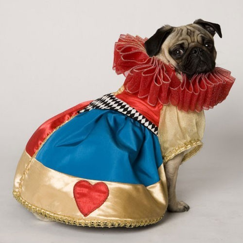awwyeahpugs:  King or Queen of Hearts?               -This photo was discovered by my lovely friend, Nicole