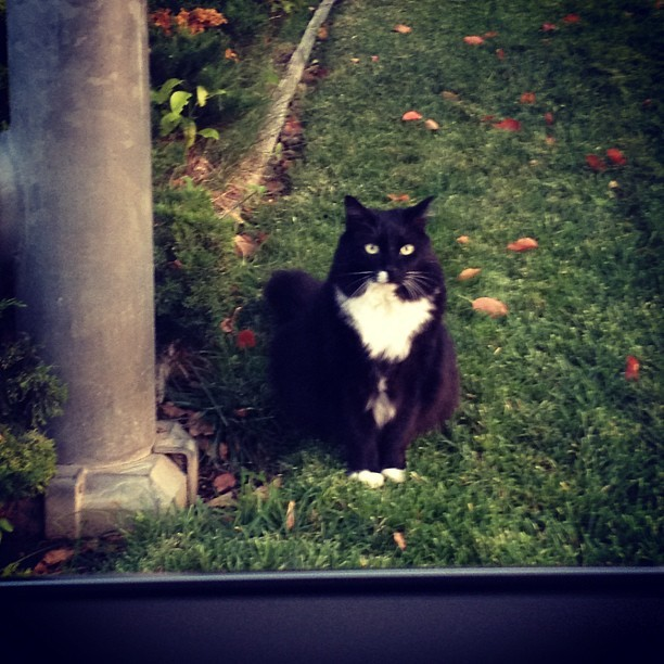 This cat has been straight up staring at us since we parked lol 😳🐱 (Taken with Instagram)