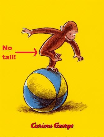 Curious George is not a monkey  At least, he doesn't have the characteristics of any known species of monkeys. The fact that he doesn't have a tail would indicate that he is an ape, not a monkey. There are tailless monkeys (the Barbary Macaque and the Celebes Crested Macaque) but they look NOTHING like Curious George. In fact, parents in a school in Atlanta were so bothered by the inaccuracies of George's anatomy that they tried to have Curious George books removed from a school. (More about this and other Curious George controversies here). Ultimately, the parents did not pursue removing the books. However, this begs the question: why is he called a monkey if he has no tail? At the time Curious George was written, most people referred to both monkeys and chimpanzees as monkeys. Today, we are more careful to make the distinction between the two animals.  Read more at http://www.omg-facts.com/view/Facts/18959#qeVV0QAQ6JHqju3K.99