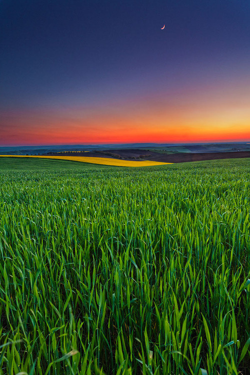 bluepueblo:  Sunset Field, Bulgaria photo via lily