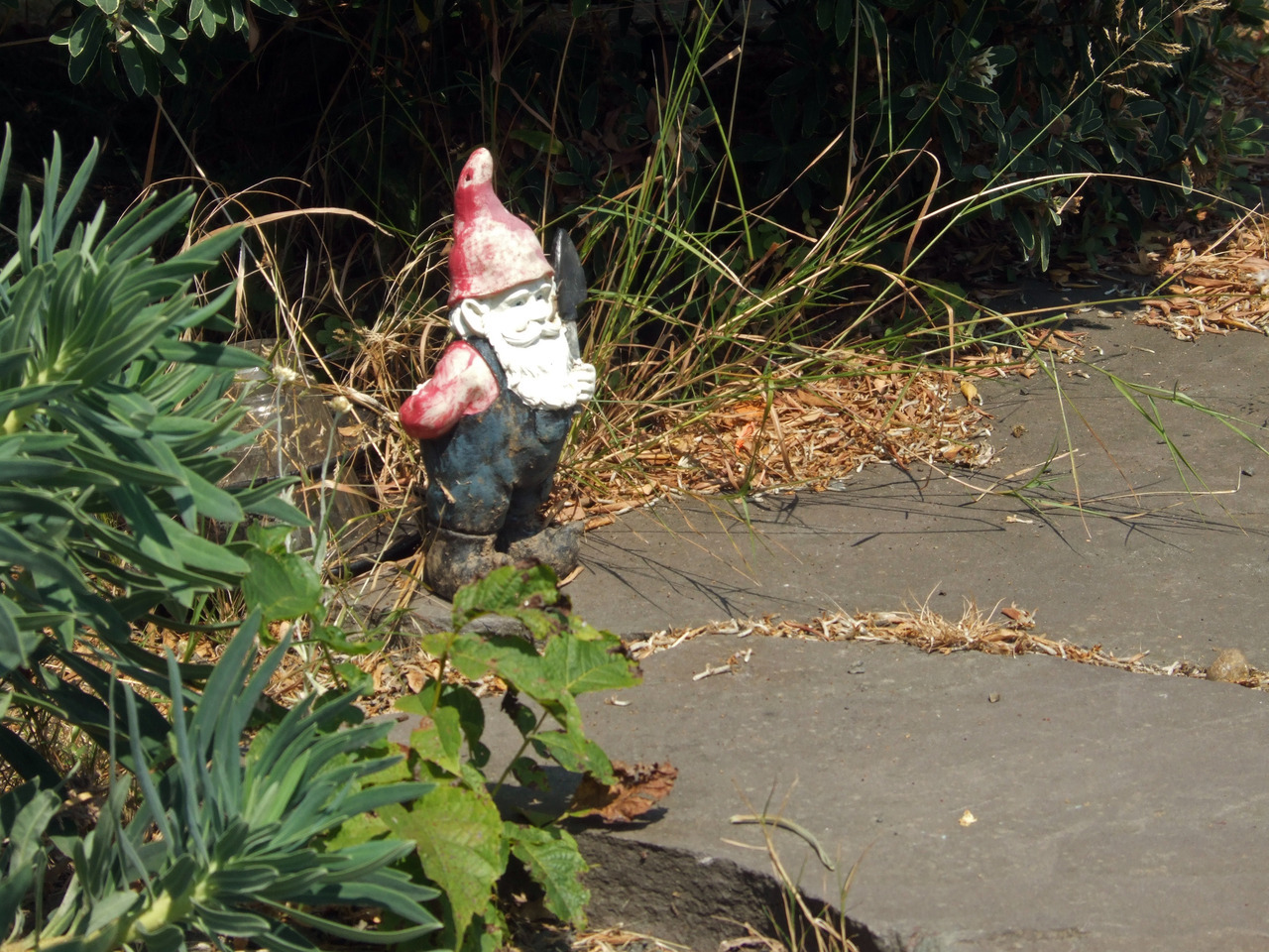 Took his picture back in September but he's moved. Industrious gnome.