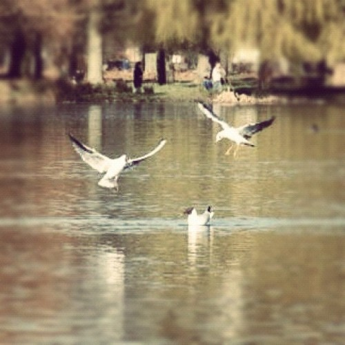 Birds (Taken with Instagram)