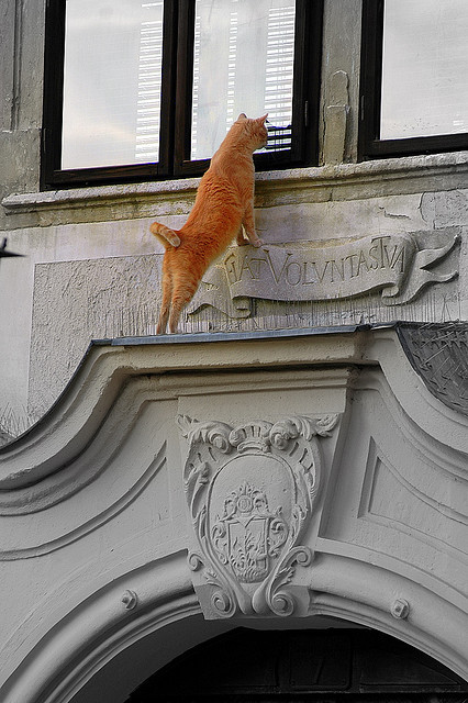 DSC_5459 Red cat in Sopron by Csaba_Bajko on Flickr.