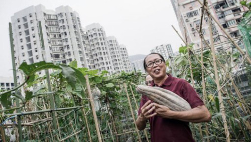 Rooftop farms flourish in space-starved Hong KongUnused roofs are some of the few places in the most heavily populated areas for budding vegetable gardeners.