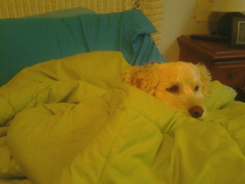 My dog has taken over my bed. Ugh. Good morning…