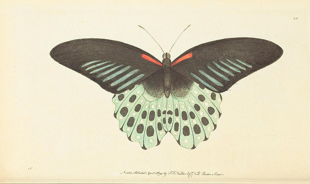 jomobimo:  Moth: The naturalists' miscellany :. London :Printed for Nodder co,1789.