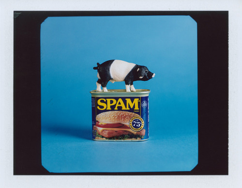 Pig - Polaroid on Flickr.