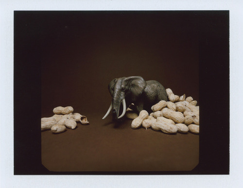 Elephant - polaroid on Flickr.