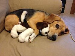 animalswithstuffedanimals:  Big Spoon via /r/aww