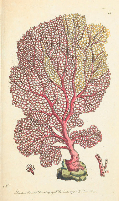 Venus sea fan - Gorgonia flabellum by BioDivLibrary on Flickr. The naturalists' miscellany :.London :Printed for Nodder co,1789..biodiversitylibrary.org/page/40297115