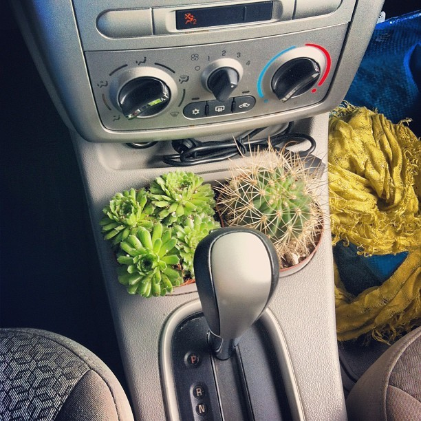 There! I'm sure this is a perfectly sensible place for a cactus.. (Taken with Instagram)