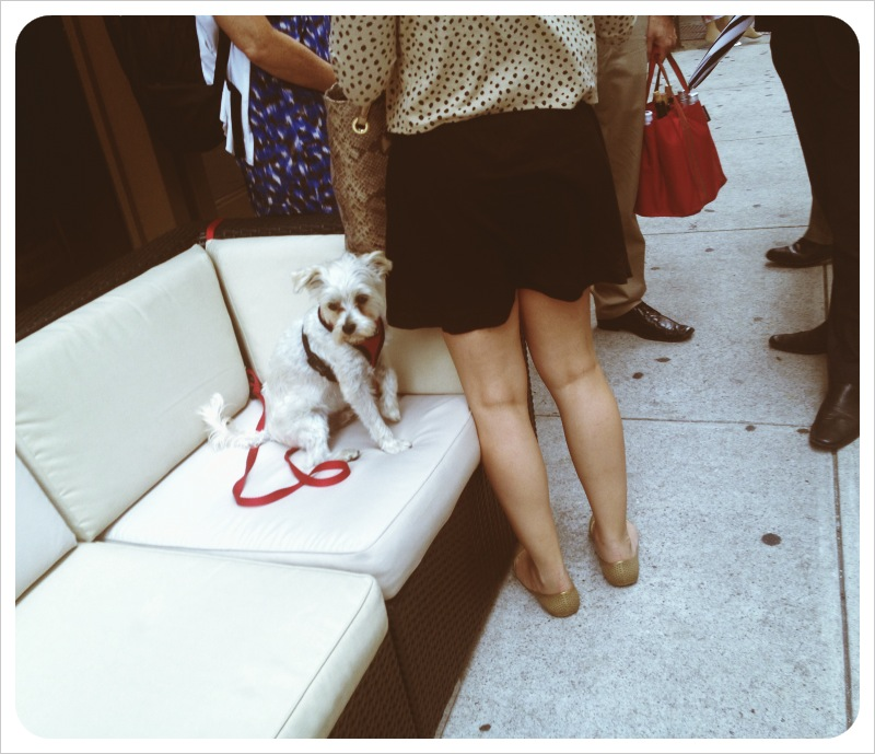 Ugh. Even the sight of an adorable, random pup on the street at the end of my workday can't help me shake my aggro attitude. Like, it would be great if there was a business where you could go, pay 10 bucks, and just wallop someone in the face for 20 minutes or so. I think it's a viable business offering. I would totes go all of the time. Maybe I need to join a fight club?  I guess I'm a skosh overwhelmed. On top of my regular day job (as a professional e-mail writer) and my regular night job (as dad to the boy), I have been chasing down countless people and documents to help get my mother's life back in order. I realize that a week at my parents' house wasn't really enough to get everything done.   While the majority of peeps I've dealt with have been very kind and helpful, there is the occasional dimwit who has frustrated me. I am not an attorney or an accountant or a financial advisor or a doctor, but I know what I know, and sometimes it seems like I know more than the so-called professionals.   I feel like nothing I do will ever be good enough for anyone. I'm failing as a son and as a dad and as a husband and as an employee. True story.   If I've learned anything over the past week, it's to BE PREPARED. You never know what shizz you will encounter in your life. And, frankly, I don't want my son or my hypothetical daughter to have to pick up the pieces of a life led in chaos.  Seriously, anypony know of a fight club in the Tri-State area that I can join?