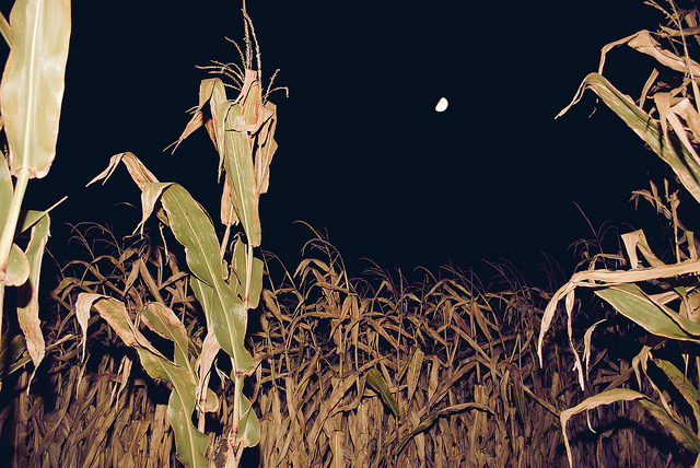 Fall Fest Weekend, Activity #1 - Corn Maze. by socialwrkrlaura on Flickr.