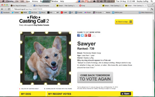 With your help, Sawyer could appear in a Fido ad. Plus, Fido is donating $ 1 for every vote to Lions Foundation of Canada Dog Guides, up to $ 200,000. Check out Sawyers's Casting Sheet and vote every day at http://fidocastingcall.ca/dog/1668570239/  Please reblog this as much and as often as you can. Click on the photo above or the link in the text to vote. Remember you can vote once per day, so bookmark Sawyer's page and get your vote on!