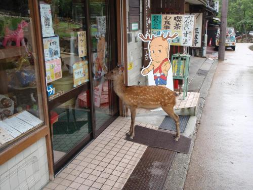 """I went to Japan. A deer was waiting to go into a store. That is all."""
