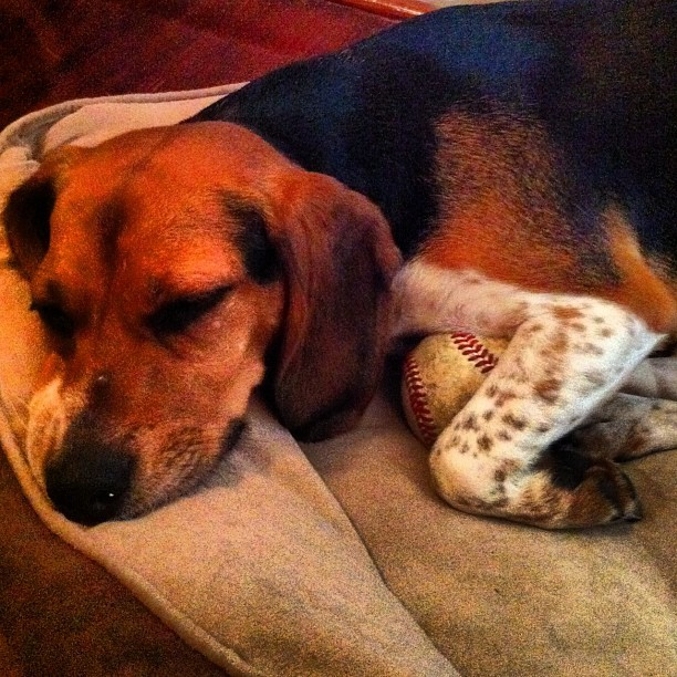 Junebug really loves that baseball. (Taken with Instagram at Heath And Sallie's Cozy Abode)