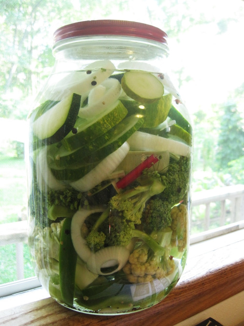 fridge pickles (by peacefulbean ( goodkarma ))