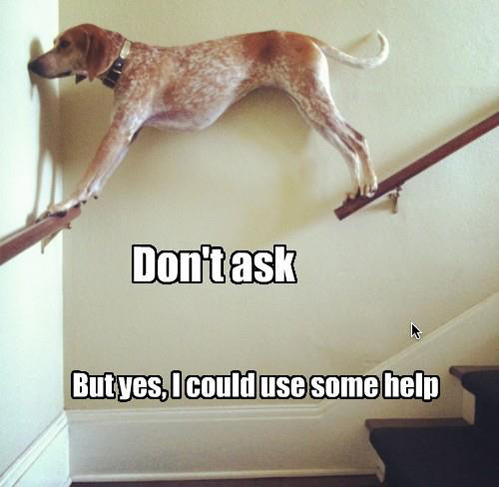 tastefullyoffensive:  [via]  so amused right now :) type of thing my dog would do