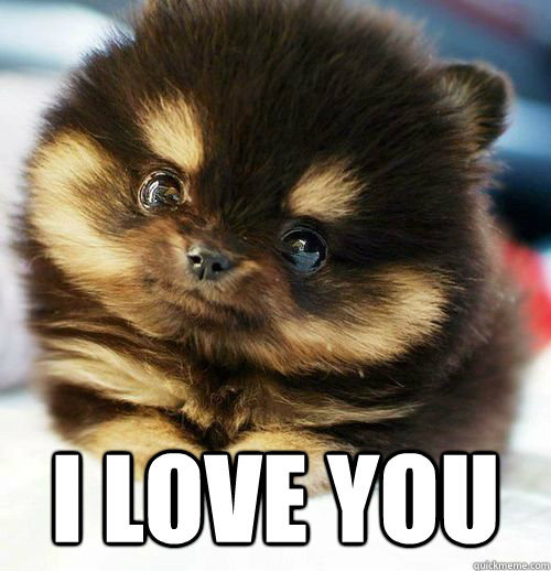 I Love You Puppy Meme - Puppy.